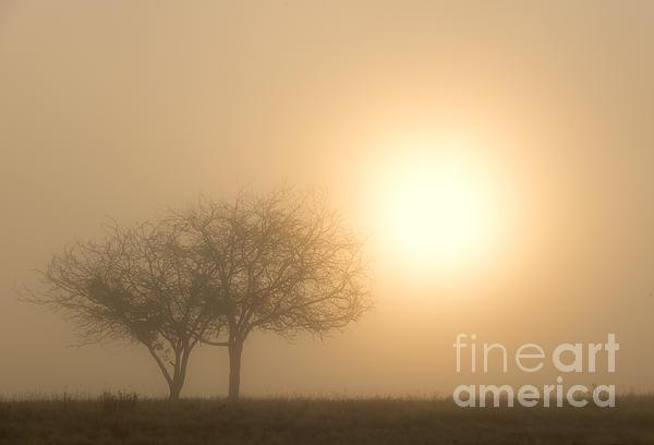 Shining Through Print by Mike  Dawson