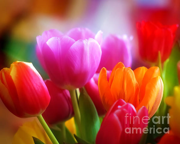 Lutz Baar - Shining Tulips