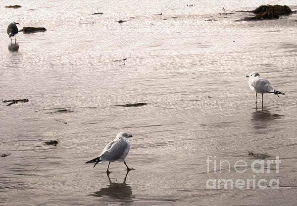 Shore Birds - 01 Print by Gregory Dyer
