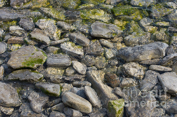 Shoreline Shapes Print by Ron Pettitt