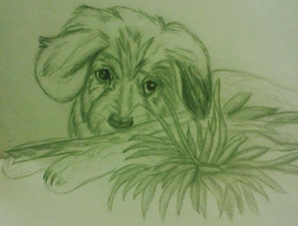 Shy Puppy Print by Christy Saunders Church