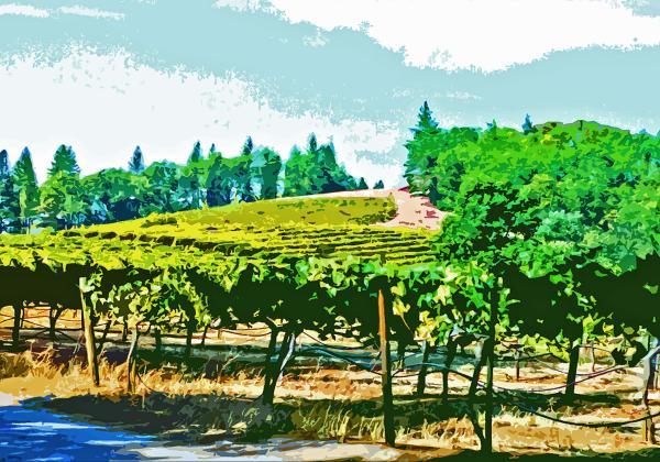 Sierra Foothills Vineyard Print by Charlette Miller