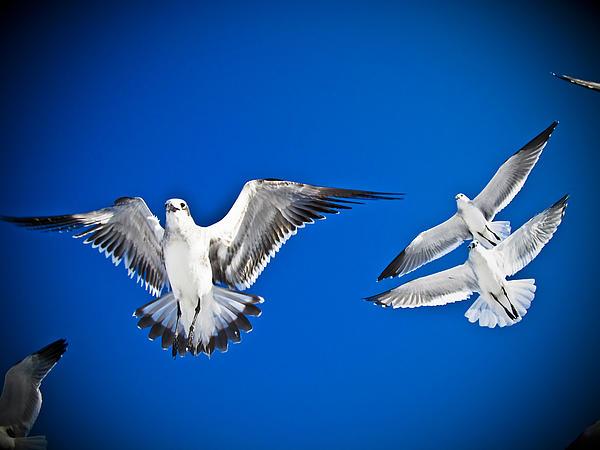 Siesta Key Sea Gulls Print by Andrea Floyd