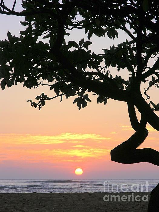 Mary Deal - Silhouette Sunrise