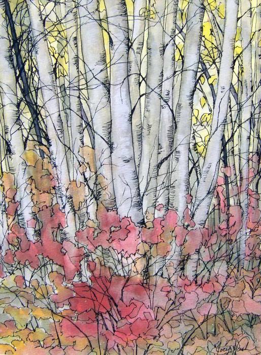 Silver Birch Print by Joey Nash