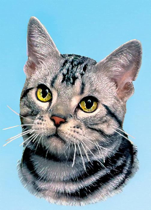 Bob and Nadine Johnston - Silver Tabby Kitten Original Painting For Sale
