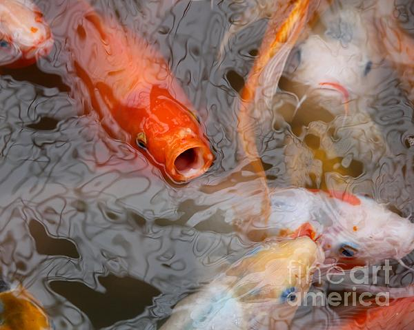 Singing Carp Print by Theresa Willingham