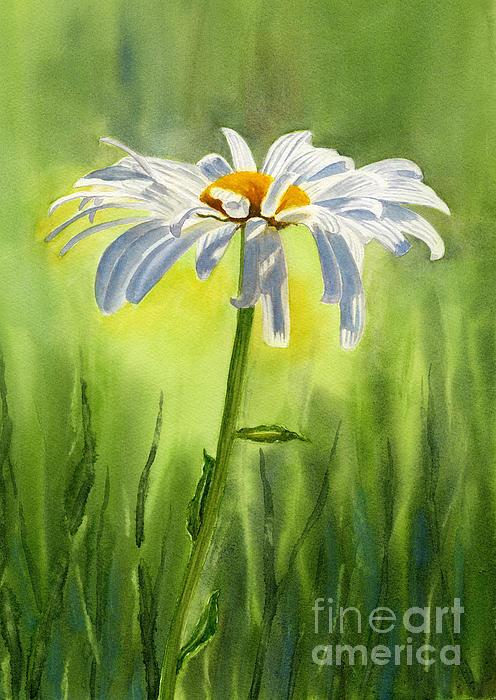 Single White Daisy  Print by Sharon Freeman