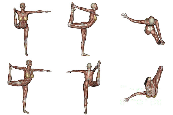 Six Different Views Of Dancer Yoga Pose Print by Elena Duvernay