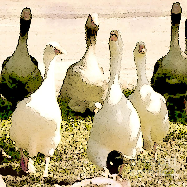 Six Geese And A Duck Print by Artist and Photographer Laura Wrede