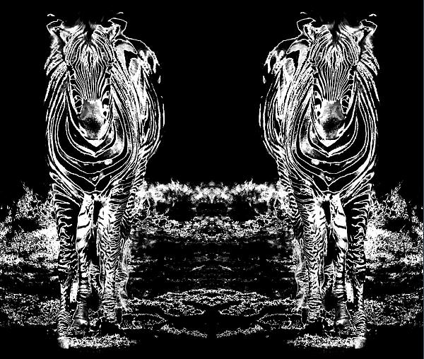 Miroslava Jurcik - Sixteen legs Of Zebras