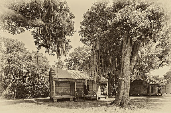 Slave Quarters Sepia Print by Steve Harrington