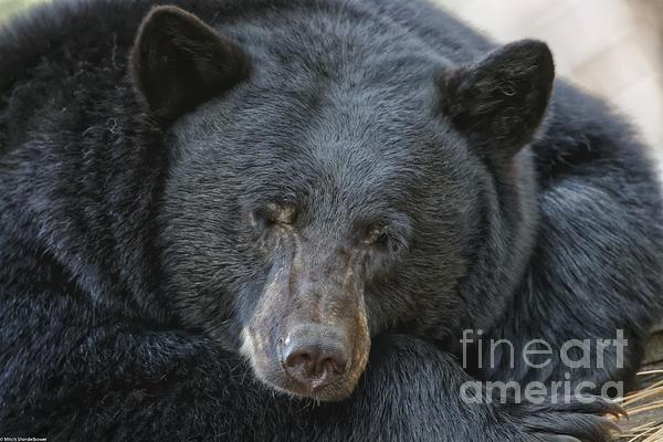 Mitch Shindelbower - Sleeping Bear