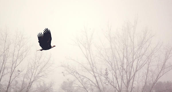 Melanie Lankford Photography - Slicing through the Fog