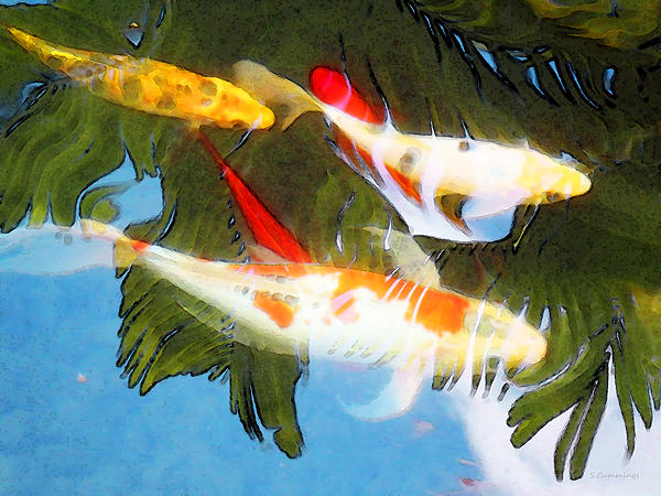 Slow drift colorful koi fish by sharon cummings for Koi fish paintings prints