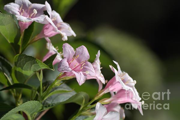 Small Flowers Print by Joy Watson