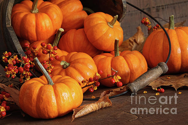 Small Pumpkins With Wood Bucket  Print by Sandra Cunningham