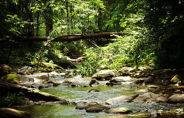 small town creek by kimberly martinez