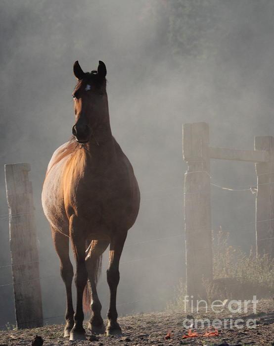 Smoke Print by Rod  Giffels