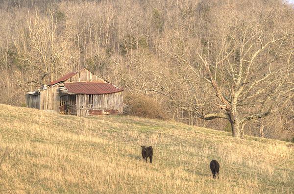 Smoky Mountain Barn 8 Print by Douglas Barnett