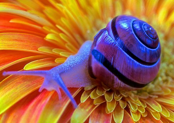 Leslie Crotty - Snail Pondering On A Flower