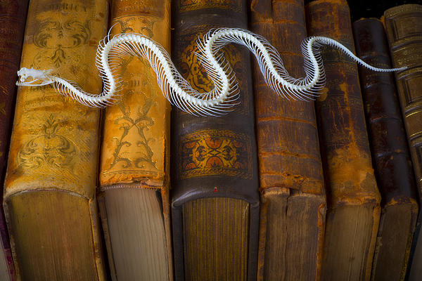 Snake And Antique Books Print by Garry Gay