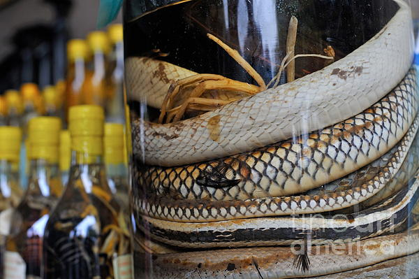 Snakes In Snake-flavoured Alcohol Bottles Print by Sami Sarkis