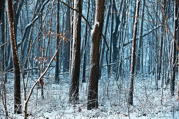 Snow At Dusk Print by Tim Michael