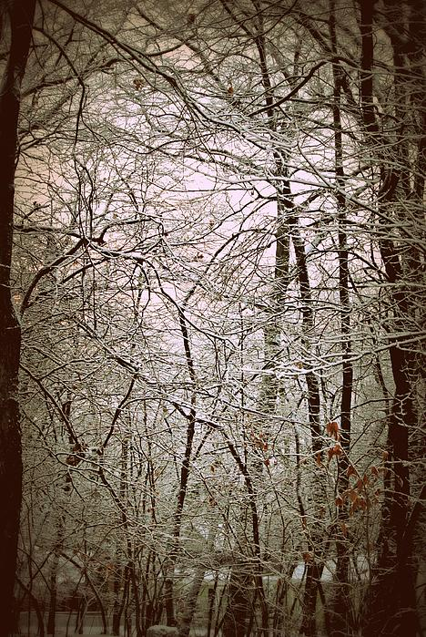 Snow Cover Forest Print by Dawdy Imagery