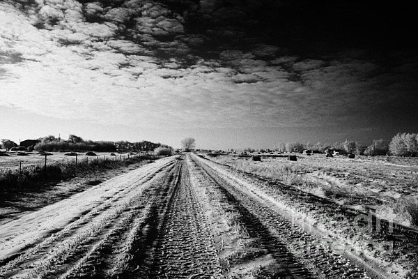 snow covered untreated rural small road in Forget Saskatchewan Canada Print by Joe Fox