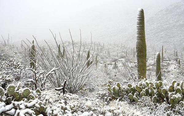Saija  Lehtonen - Snow Day in the Desert