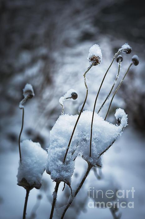 Snow Forms Print by Belinda Greb