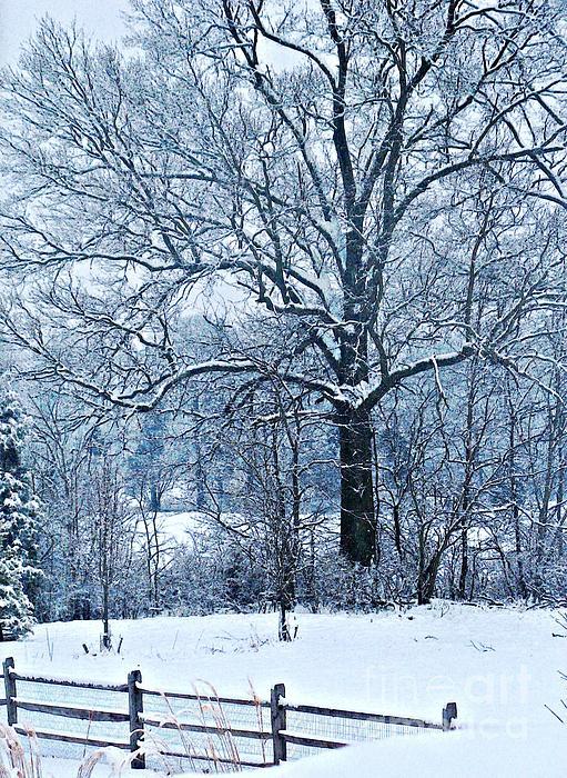 Snow Print by Sarah Loft
