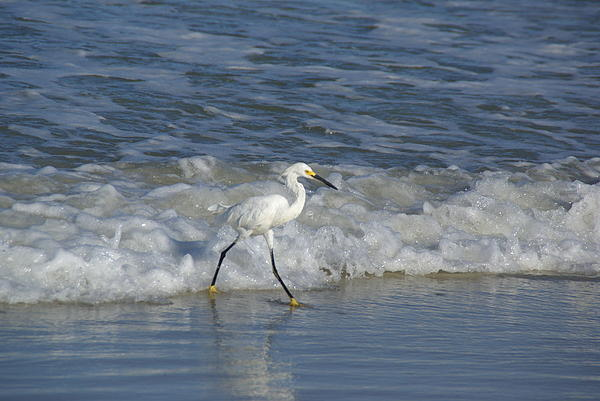 Snowy At The Beach Print by Patricia Twardzik