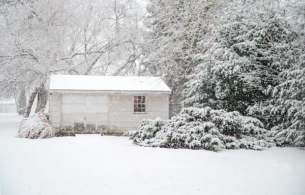 Snowy Barn Print by Mary Timman
