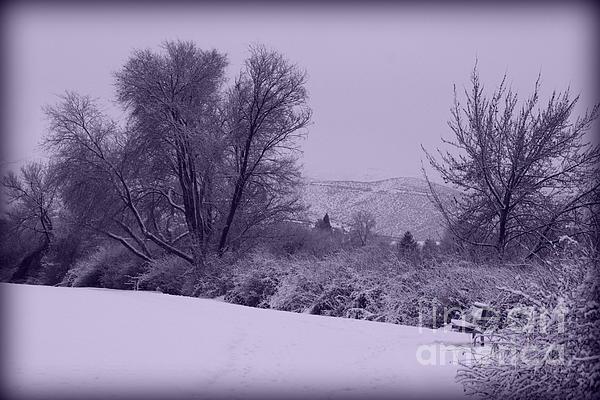 Snowy Bench In Purple Print by Carol Groenen