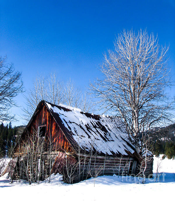 Snowy Cabin Print by Robert Bales