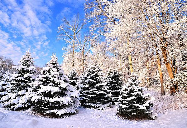 Snowy Dreams Print by Angel Cher