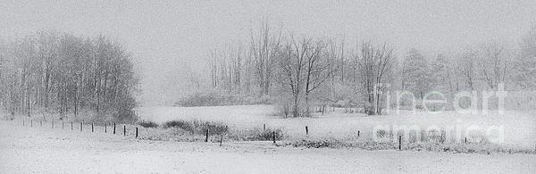 Snowy Fields Print by Michele Steffey