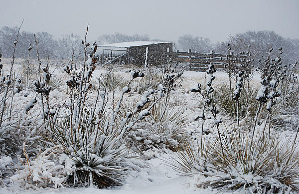 Snowy Pasture Print by Melany Sarafis