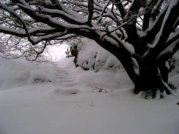 Snowy Path Print by Amanda Moore