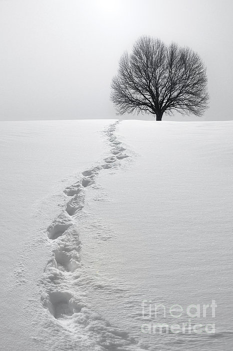Snowy Path Print by Diane Diederich