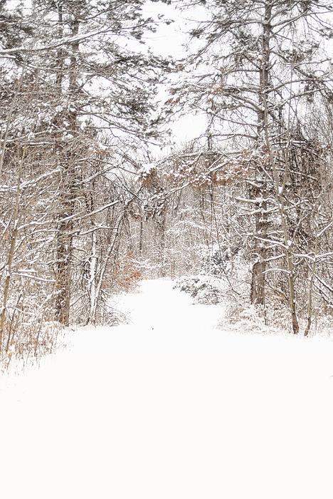 Snowy Path Print by Mary Timman
