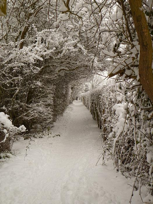Vicki Spindler - Snowy Path