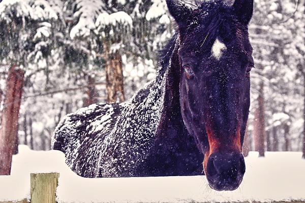 Snowy Spirit Print by Teri Virbickis
