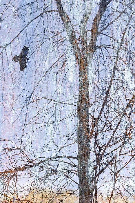 Snowy Tree Print by Carol Leigh