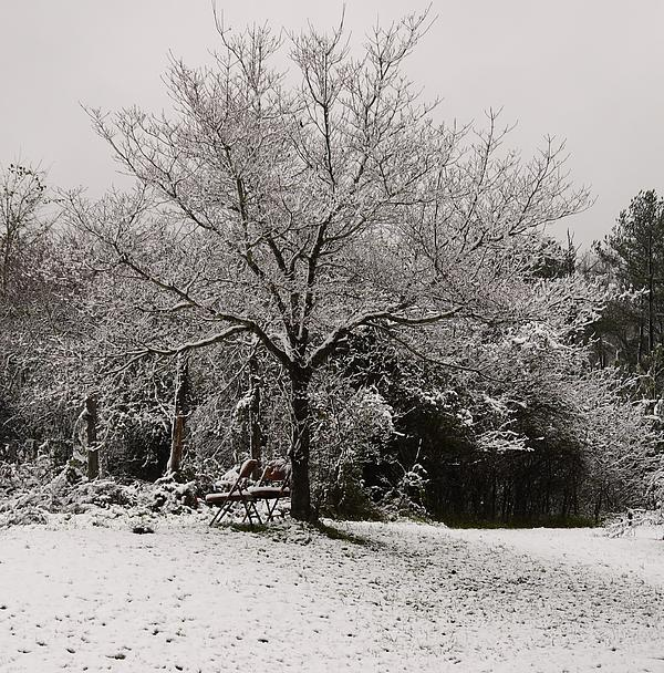 Snowy Trees And Chair Print by Debbie Kizziah