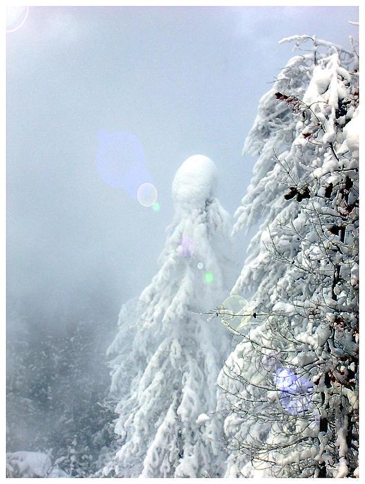 Snowy Trees Print by Kae Cheatham