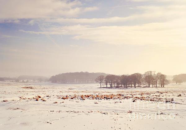 Snowy Valley Print by Lyn Randle