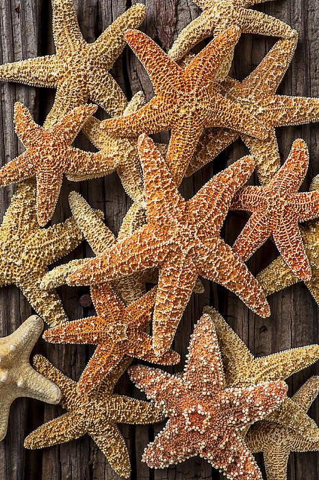 So Many Starfish Print by Garry Gay